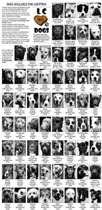 Dogs-for-adoption-12-9