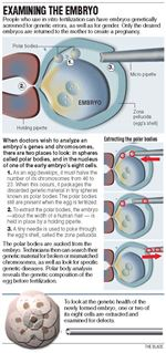 10-25-04-Examining-the-Embryo-graphic
