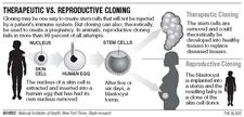10-26-04-theraputic-vs-reproductive-cloning