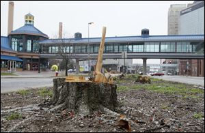 Tree stumps and sawdust remain in the median on Summit Street between Adams and Jackson streets.