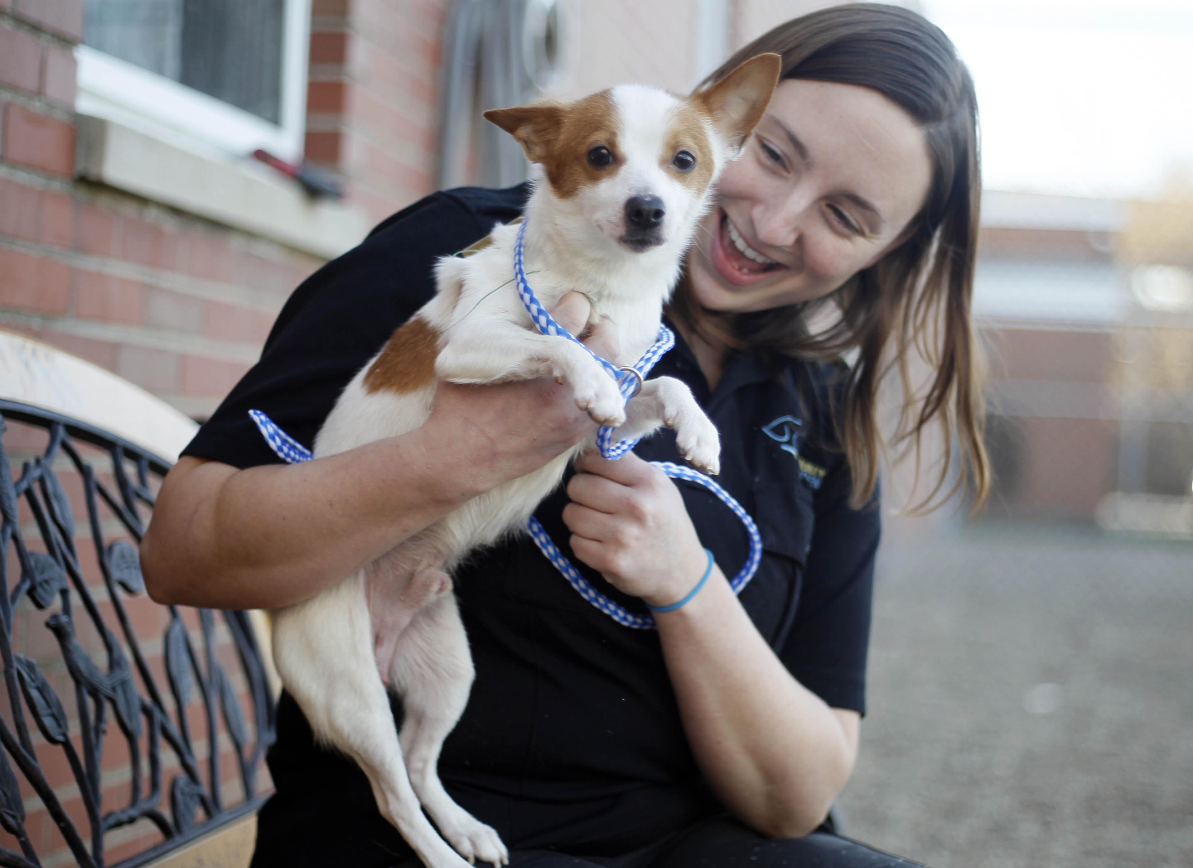 Dog Rescue Jobs Ontario