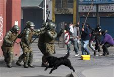 Chile-Demo-Dogs-1