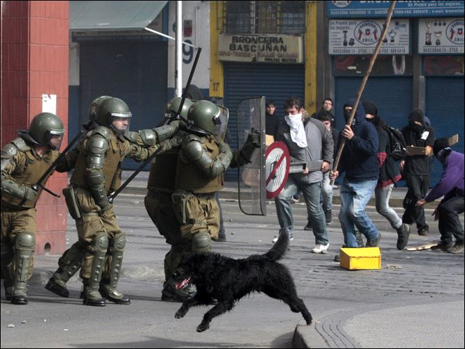 Chile Demo Dogs A dog runs as police clash with student protesters in Santiago, Chile, in July.