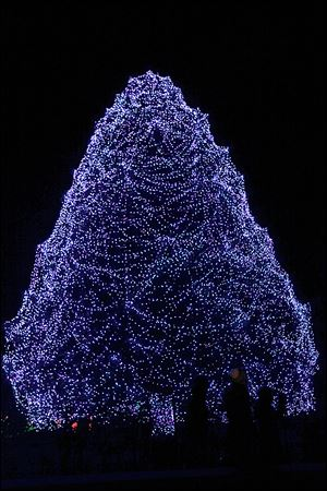 The 85-foot Norway spruce that's part of the Lights Before Christmas event in the Toledo Zoo was honored for the whimsical 'weblike designs' of the draping of its lights. The Rockefeller Center tree in New York placed first, followed by the National Christmas Tree in Washington.