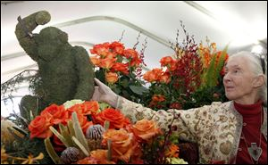 Jane Goodall, the world's foremost expert on chimpanzees looks over flowers in Pasadena, Calif., Monday. Goodall will be the Grand Marshall of the 2013 Rose Parade.