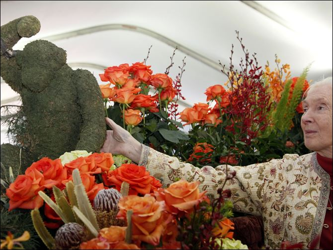 Grand Marshall Goodall Jane Goodall, the world's foremost expert on chimpanzees looks over flowers in Pasadena, Calif., Monday. Goodall will be the Grand Marshall of the 2013 Rose Parade.