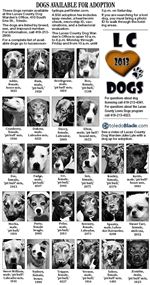 dogs-for-adoption-1-6