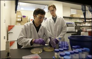 Principal scientists Matt Drever, left, scrapes bacteria from an agar plate during an antibody phage experiment as principal scientist Charlie Holst watches at the Pfizer laboratory at the the University of California at San Francisco (UCSF) Mission Bay campus in San Francisco.