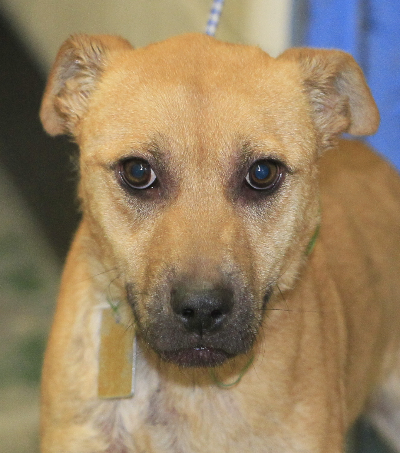Lucas County Dogs For Adoption: 1-12