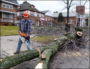 A city worker cuts a felled tree into smaller sections along Collingwood Boulevard.