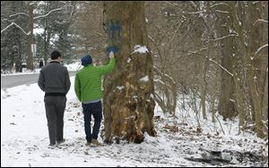 Peter Graham, 16, a junior at Ottawa Hills High School, touches the tree where Brian Hoeflinger was killed on Edgehill Road as he and Robert Grimm, 17, a junior at St. Francis de Sales High School, look over the site of the accident in Ottawa Hills.