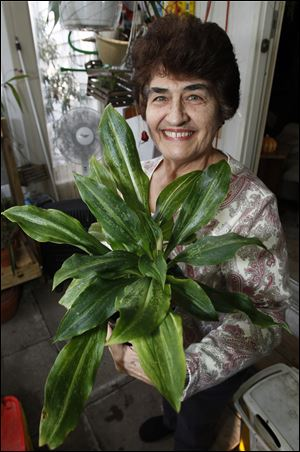 Mary Bell holds a Jewell orchid plant.