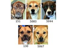 Dogs-for-adoption-2-7