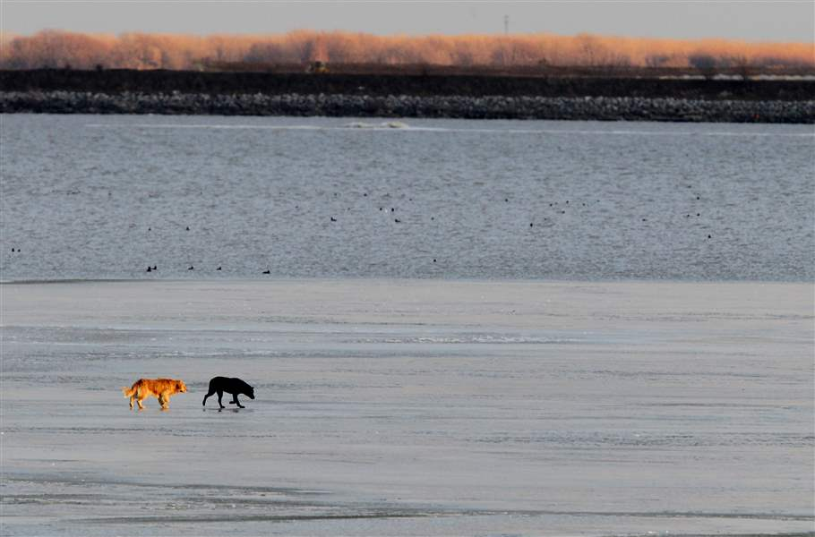 Stranded-dogs-on-ice-floe