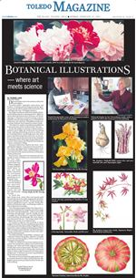 toledo-mag-botanical-illustrations