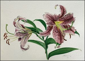 An illustration of an oriental lily by David Herzig.