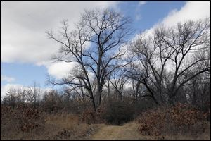 Wildwood Preserve Metropark will undergo intensive restoration work that will result in improved habitat for numerous species, including birds, more than 50 types of butterflies, and many types of rare, native plants.