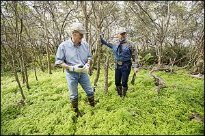 U.S. Sen. Bill Nelson (D., Fla.), left, and Florida wildlife commissioner Ron Bergeron, search the grassy underbrush for pythons on an island in the Everglades.