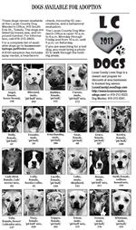 Dogs-3-3-13