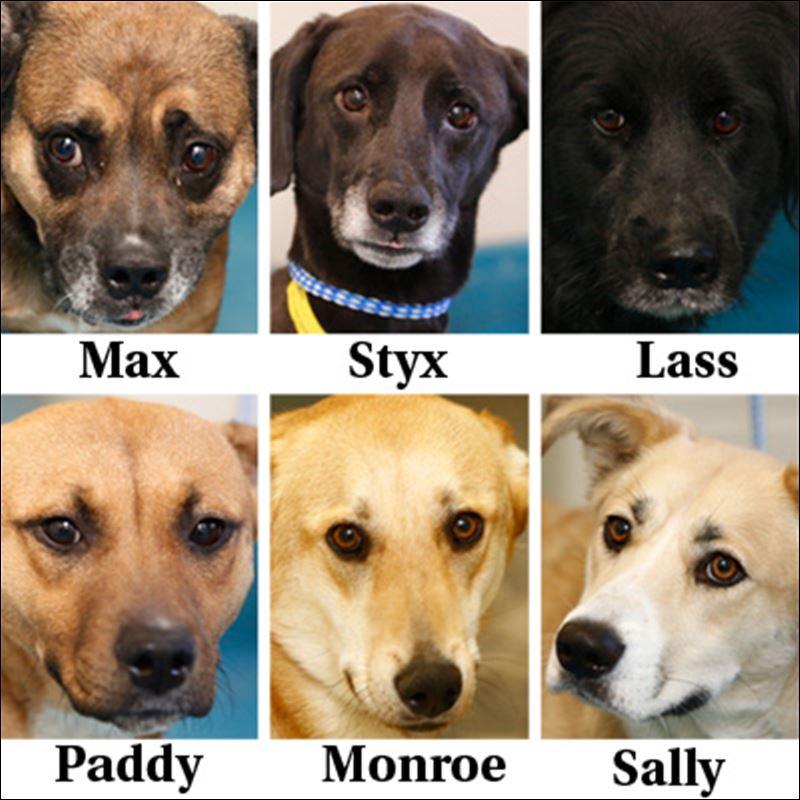 Toledo Area Dog Adoption