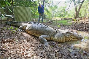 The 17-foot saltwater crocodile, simply called the 'Big Guy' in his native country, now resides in a mud hole at a crocodile sanctuary in Darwin, Australia. He's also called a nuisance after killing too many cows in the wild.