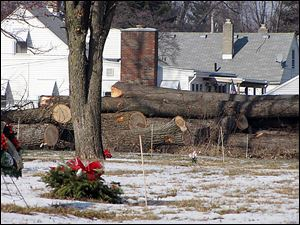 Logs waiting for transport by crews from Care Caskets of Wharton, Ohio, sit along the north border of Historic Woodlawn Cemetery. Woodlawn is removing hundreds of trees on the grounds.