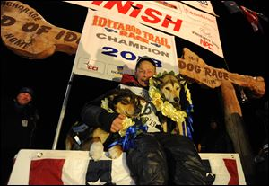 Mitch Seavey became the oldest winner, a two-time Iditarod champion when he drove his dog team under the burled arch in Nome on Tuesday evening, March 12, 2013. He sits with his two lead dogs, Tanner, left and Taurus, right.