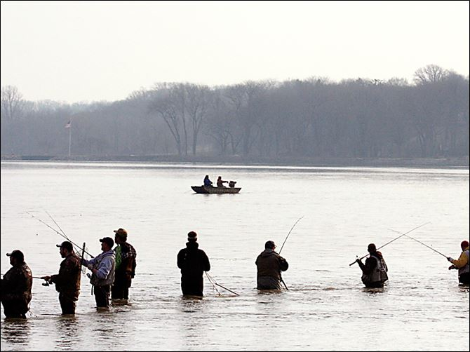 Walleye run on rivers provides tried tested cure for for Maumee river fishing