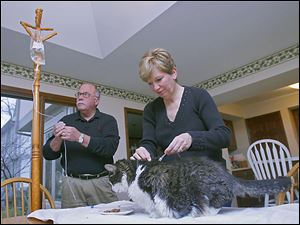 Toledoans Joe and Anne Reynolds administer medicated fluids in their kitchen to Kit Kat to treat his chronic kidney failure, which is not uncommon in older cats.