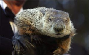 Punxsutawney Phil did not see his shadow, thereby claiming there would be an early spring. He was wrong.