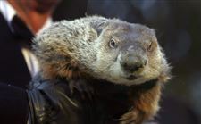 Groundhogs-Fallible-Forecast-3
