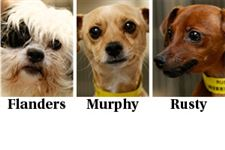 Dogs-for-adoption-March-27
