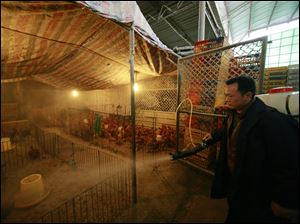 A worker spays disinfectant liquid on to chicken cages at a wholesale market on Thursday, April 4, 2013, in Shanghai, China. In a worrisome sign, a bird flu in China appears to have mutated so that it can spread to other animals, raising the potential for a bigger threat to people, scientists said Wednesday.