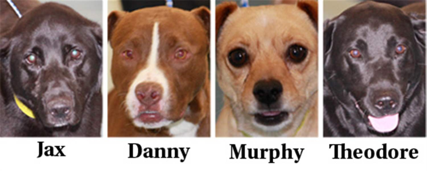 Dogs-for-adoption-April-12