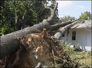 Uprooted trees have cut through a roof of a house in the 500 block of Favony Avenue in Holland. A storm swept through the area on Thursday, July 5 snapping trees, poles and power lines.