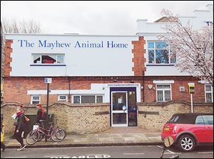 The Mayhew Animal Home  in Trenmar Gardens, Kensal Green, London, is the shelter where Margaret Thatcher adopted her cat in 2007. The former prime minister had to have her home checked for suitability before she was allowed to adopt a pet. She later gave up the cat because Ms. Thatcher had become too frail.