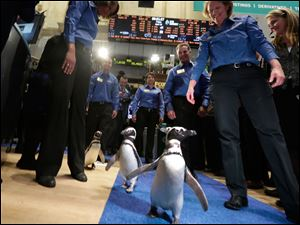 Penguins from SeaWorld are escorted by their handlers on the floor of the New York Stock Exchange during the company's IPO today.