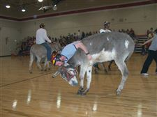 Donkey-Basketball