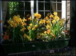 Tall and small flowers that complement one another in this springtime window box assortment.