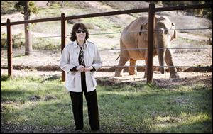 """An Apology to Elephants,"" is narrated by Lily Tomlin and is an unabashed polemic, calling for improved treatment of elephants in zoos and an end to the use of the animals as entertainment, which the film contends must invariably involve abuse."