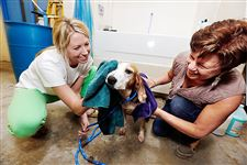 Volunteers-wash-Ella-Mae-dogs
