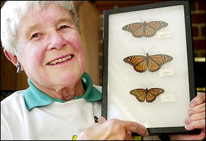 Doris Nettleman Stifel holds a case with female and male monarchs and, at bottom, a viceroy butterfly.