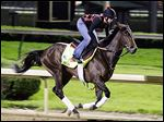 Exercise rider Jenn Patterson rides Kentucky Derby entrant Orb for a workout at Churchill Downs Friday. Orb is favored to win today, but history shows that is no guarantee of success.