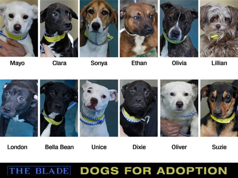 Dogs-for-Adoption-12-up-jpg