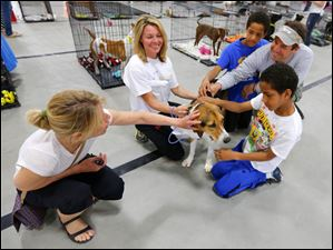 Sue Lee, left, her husband Matt, and their twin nine year old sons Josh Lee, in blue, and Sam Lee, get to know Sonya, a female foxhound, with the help of Liz Bahnsen, a volunteer at the Lucas County Dog Warden Office, second from left.