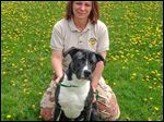 Dog Warden Georgia Dyson, with Barney, is to lose her job as Paulding County becomes the first in northwest Ohio to shift. Nine other counties in the state have done so. The assistant warden is to lose his job too.