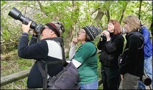 Javier Hernandez, left, Evelyn Quinones, both of Hatillo, Puerto Rico, Sheila Mumpton of Conesus, N.Y., and Jill Church, of Rochester, N.Y., look at a white-eyed viriole at Magee Marsh State Wildlife Area in Oak Harbor.