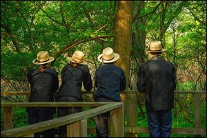 Birding has experienced a significant growth in popularity in all ages and backgrounds. Four Amish men look for migrating warblers along the Magee Marsh boardwalk.