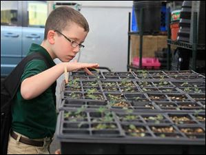 Braden Steiner, a fourth grader, looks at the lupine at Wildwood Environmental Academy that will be donated to the Toledo Zoo.