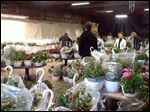 Shoppers on the hunt at Flower Hospital annual flower sale to benefit the hospice program.